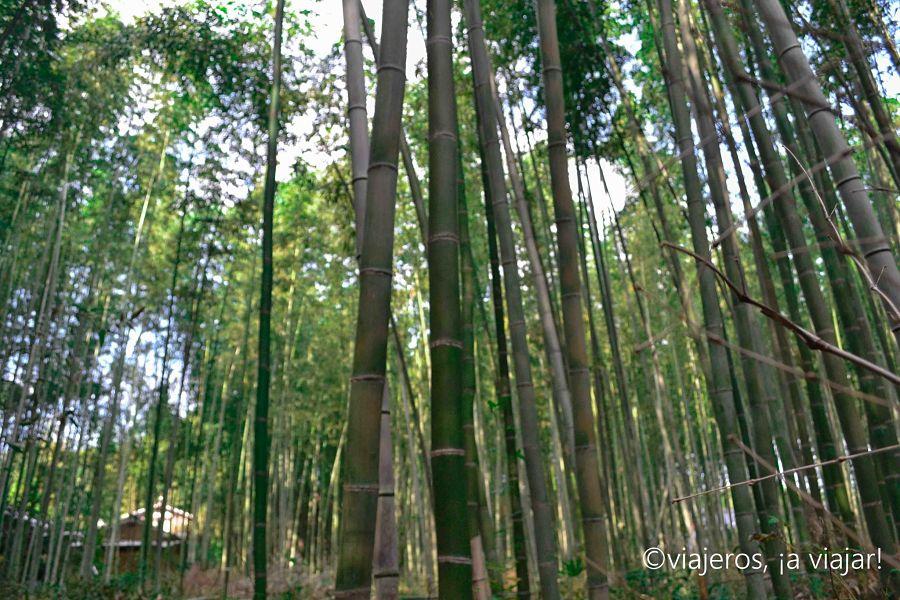 Arashiyama. Bosque de bambú